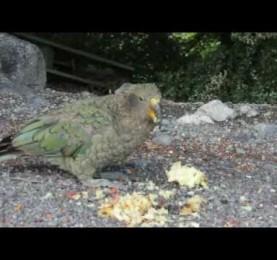 Species video