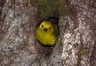 Routeburn Dart Wildlife Trust